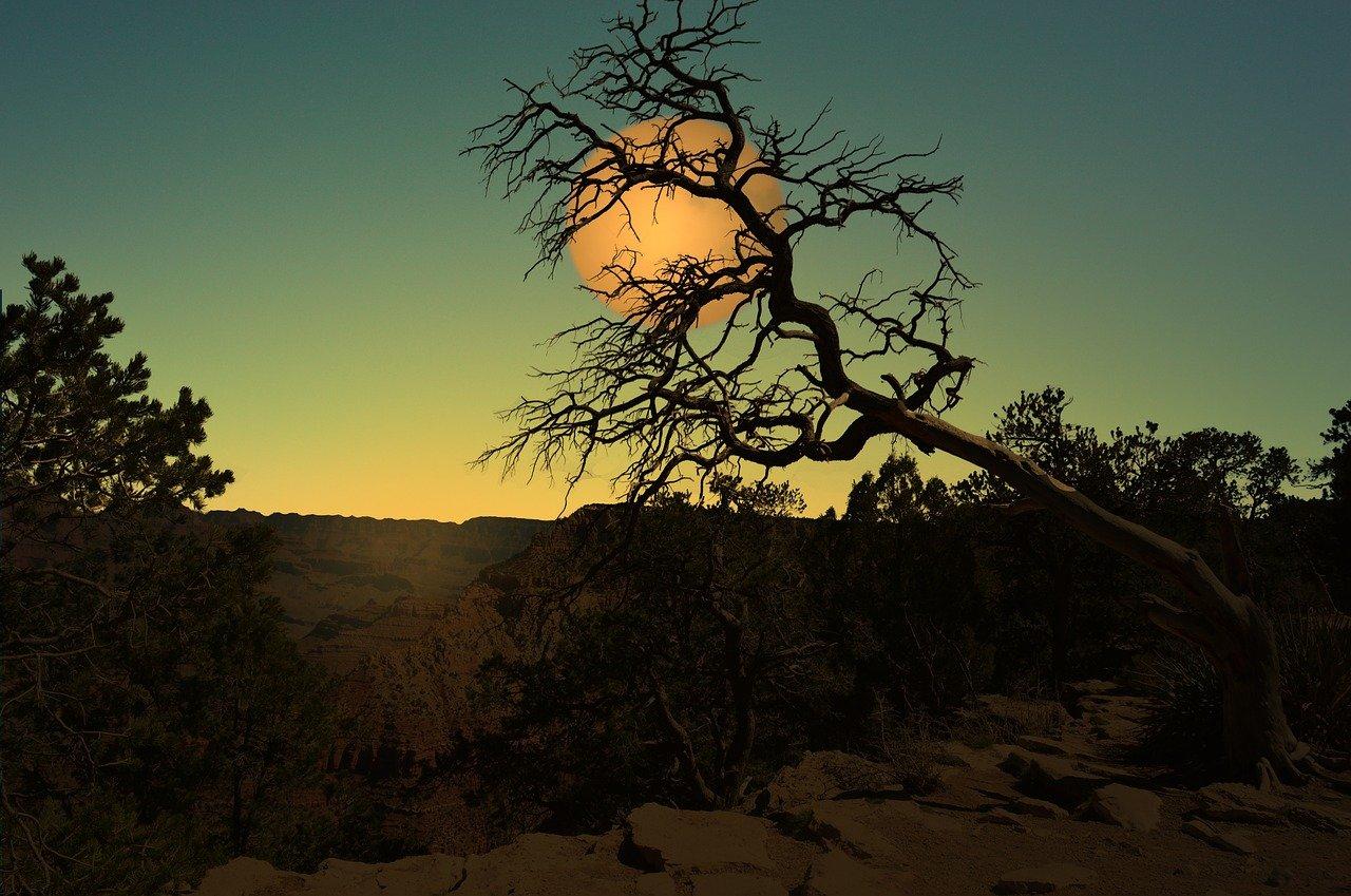 landscape, moon, night-1629977.jpg